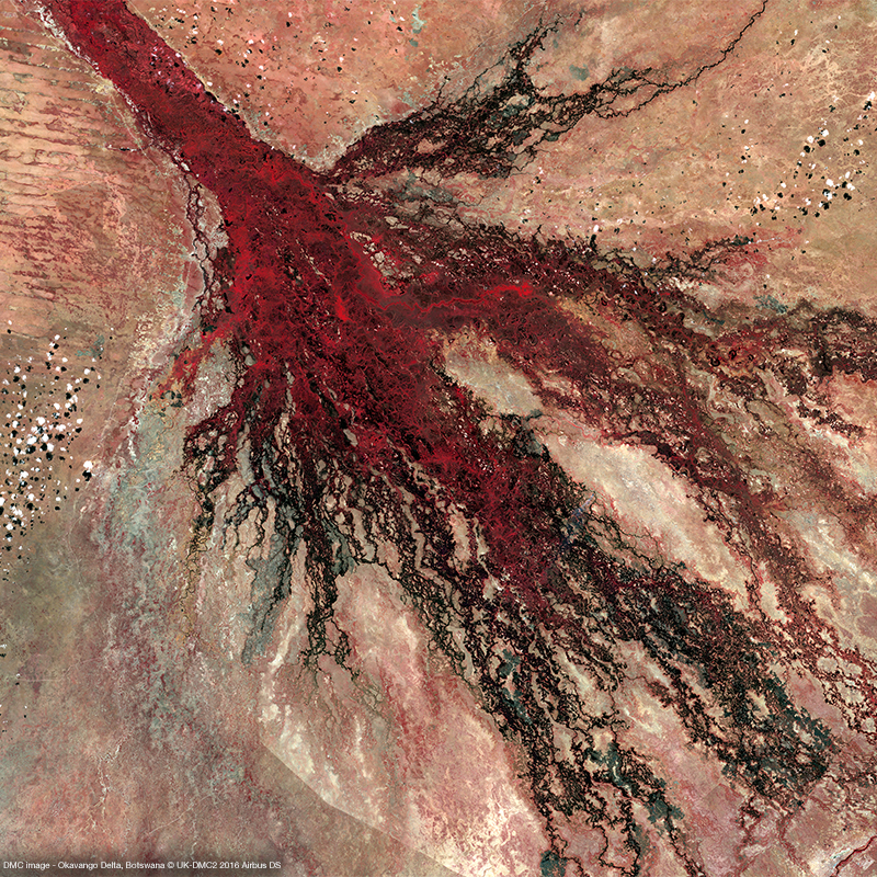 DMC Constellation Satellite Image - Okavango Delta, Botswana