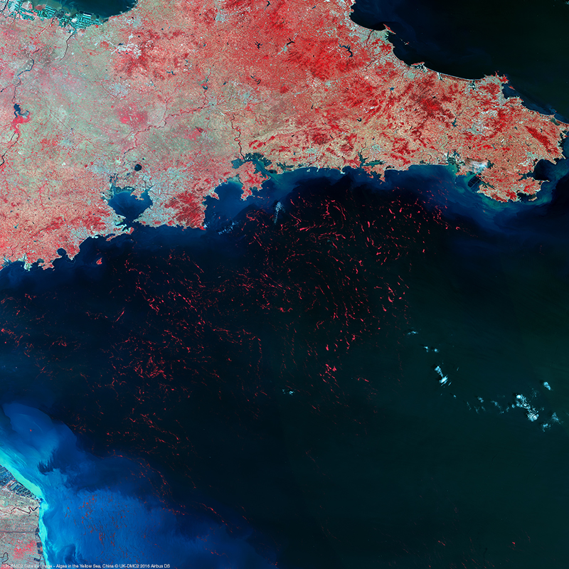 UK-DMC2 Satellite Image - Algea in the Yellow Sea, China