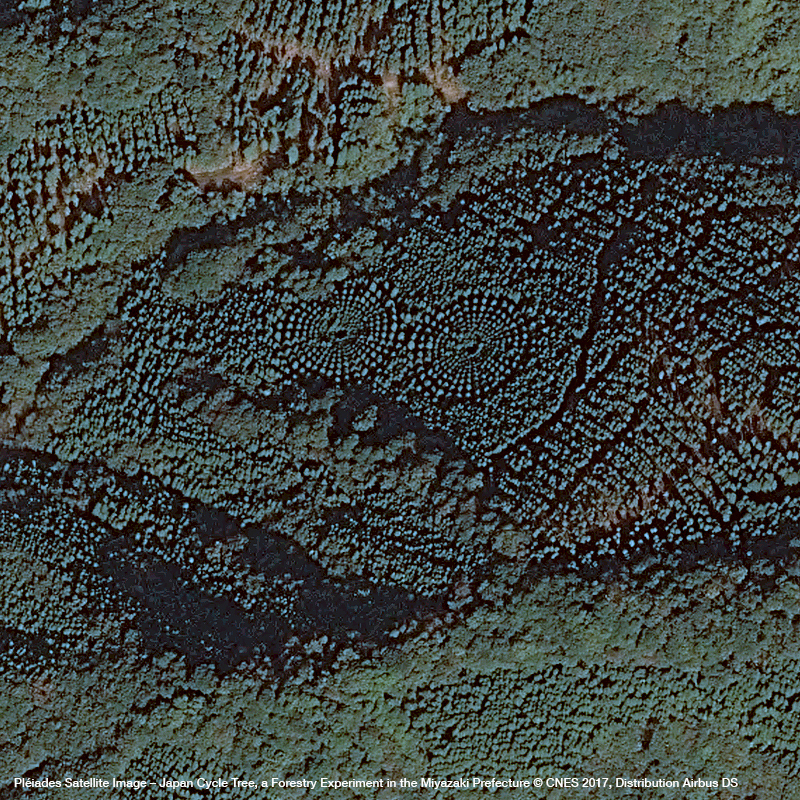 Pléiades Satellite image – Japan Cycle Tree, a Forestry Experiment in the Miyazaki Prefecture
