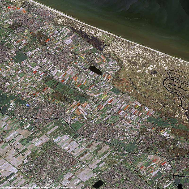 Pléiades - Hoofddorp fields of poppies, Netherland