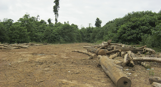 Forest Degradation in Ghana