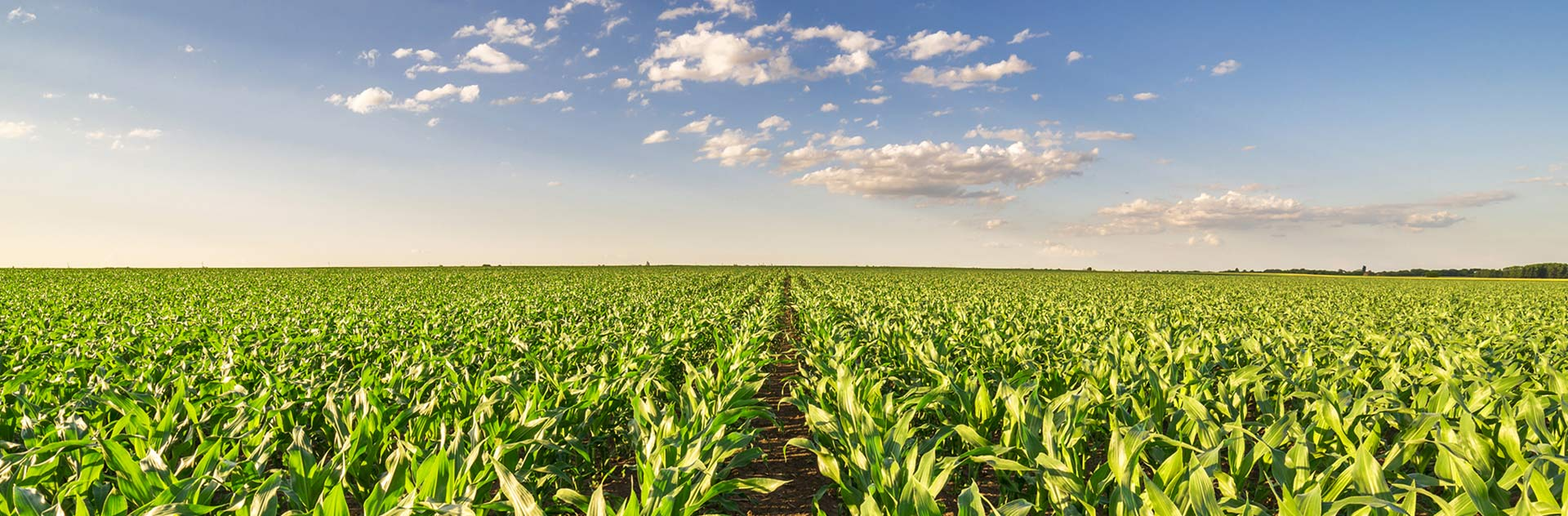Starting in 2019, Farmstar will deliver recommendations on cultivation of forage and grain corn crop management.