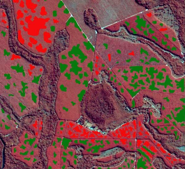 Case study disease detection in eucalyptus clones with satellite data/