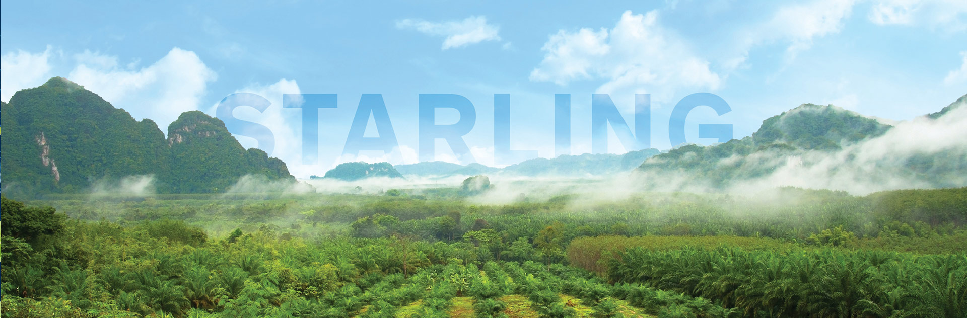 Verify your forest impact with Starling, Airbus forest monitoring services