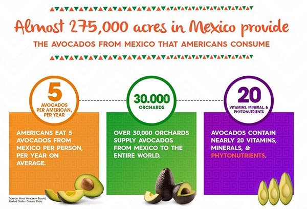 Facts and figures about avocados