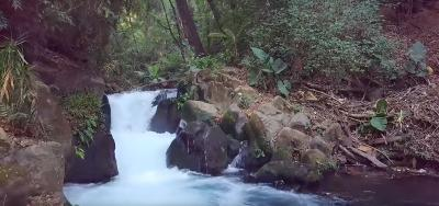 Natural river in Uruapan that helps provide water to the avocado nursery.