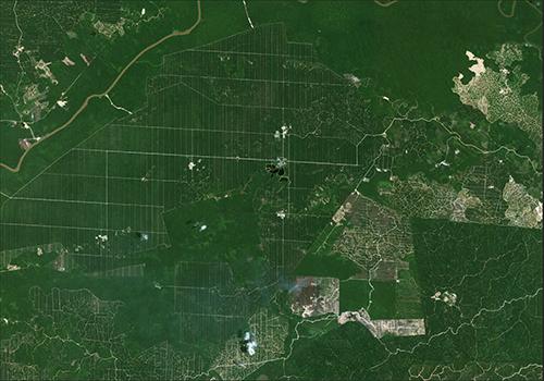 Indonesia Borneo Forest