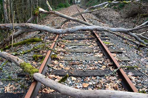 Tree trunks obstruction railway tracks
